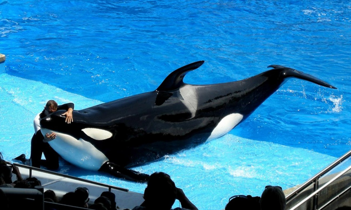 SeaWorld's shame: More attacks on Blackfish