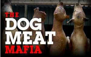 Groups in Asia are fighting against the rise in dog meat consumption.