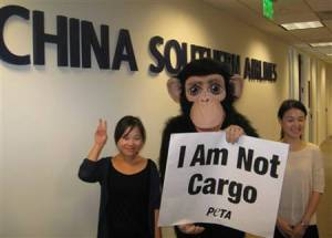 China Southern Airlines continues to be cruel to monkeys.