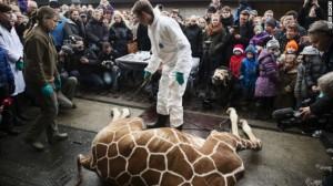 giraffe-marius-shot-story-top