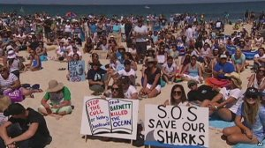 Australians band together to protest shark cull.